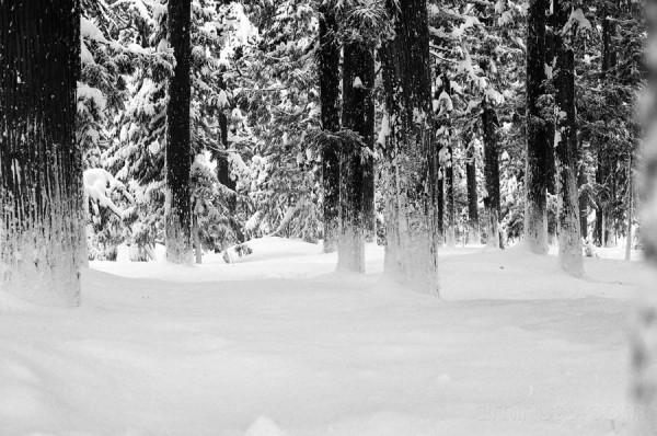 Jinguji in the snow 5