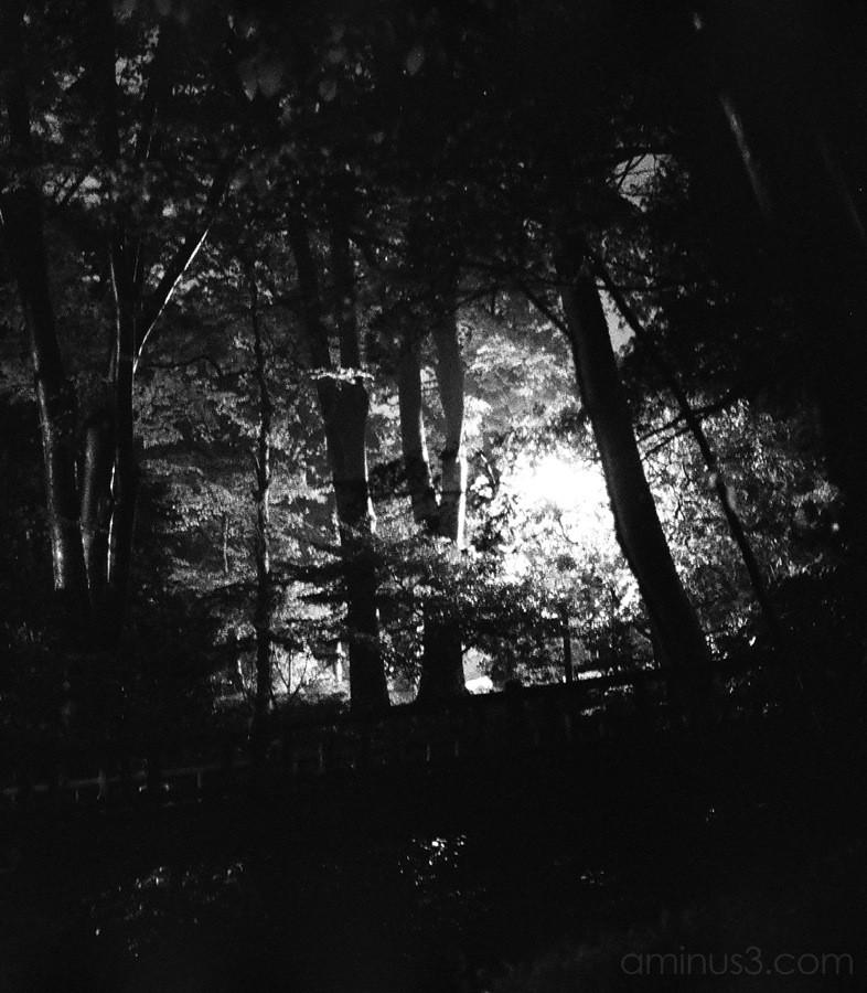Alice at night