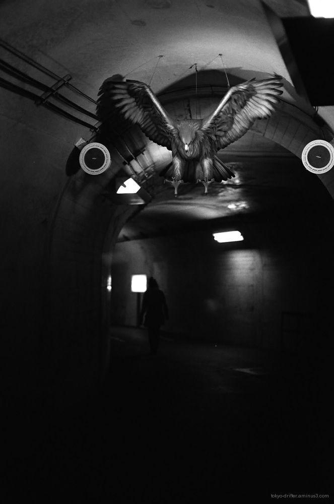 Nocturnal Eagle