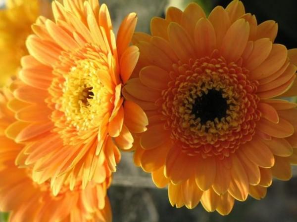 Orange or Dark Yellow?