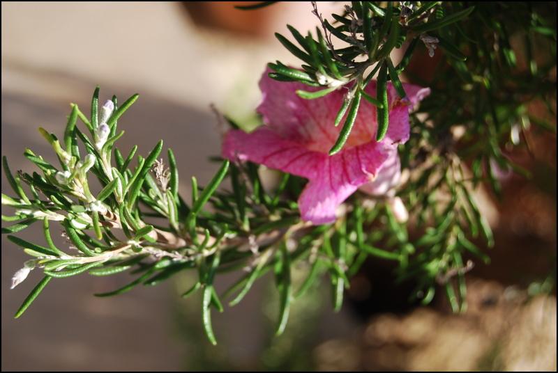 Flower (II)