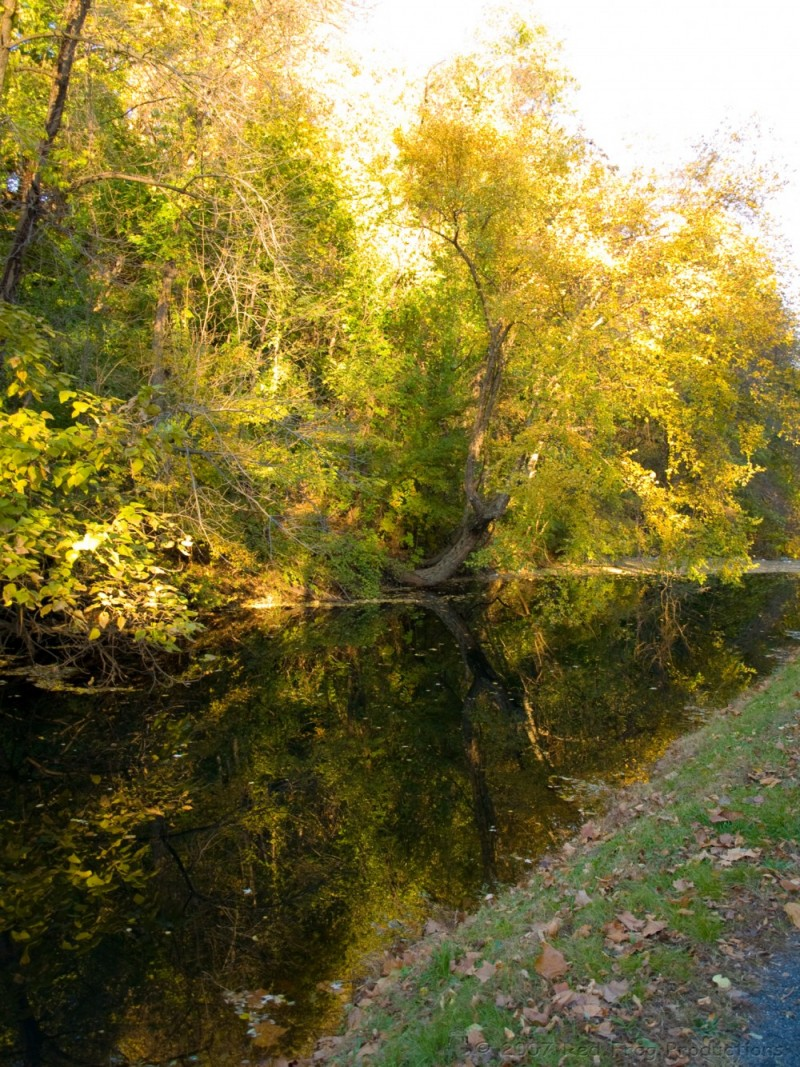 Autumn along the canal