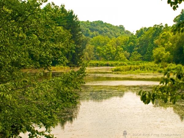 Fogelsville Pond