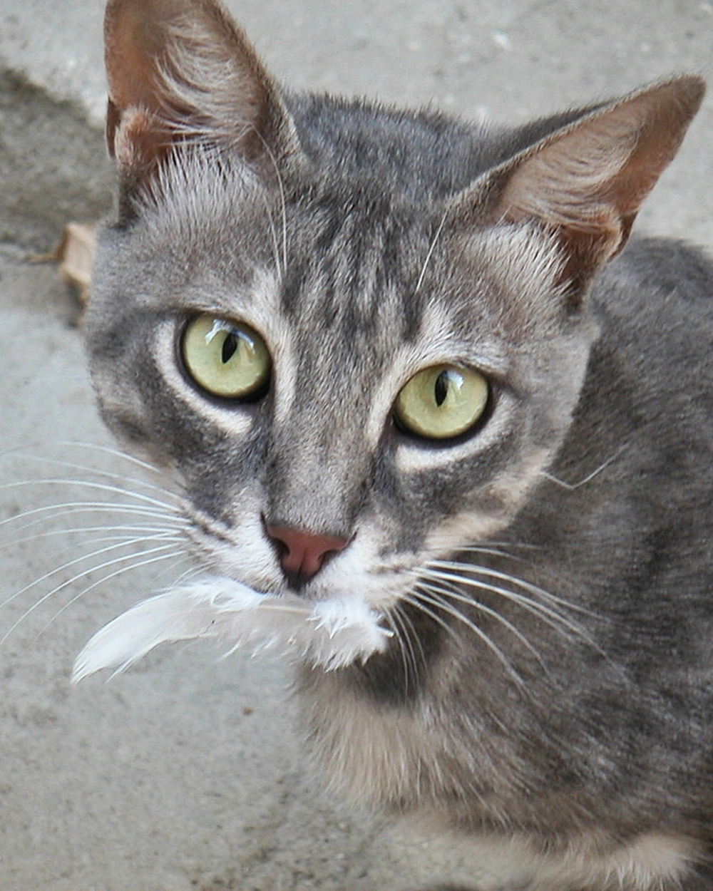 cat with bird feather