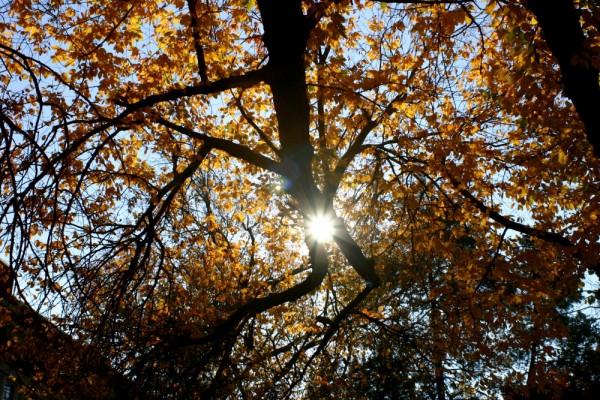 fall at UNC