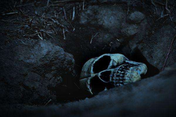 Last Skull Photo