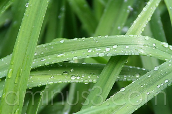 waterdrops of grass