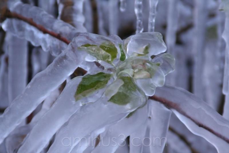 Apfelbaum im Eismantel