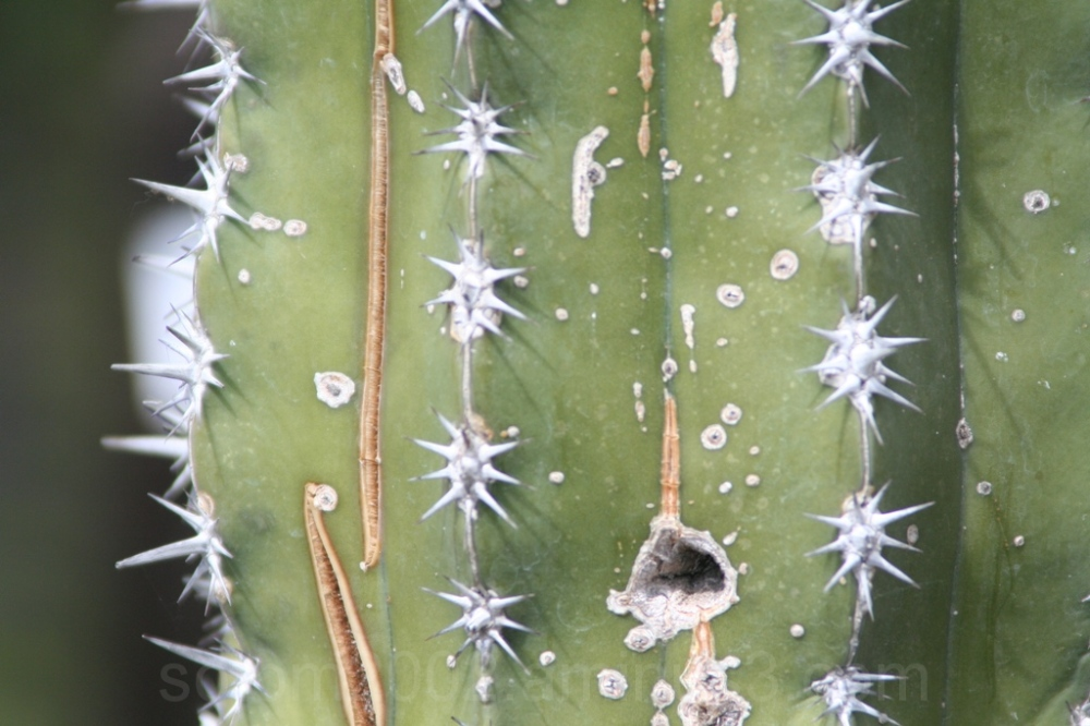 part of a cactus