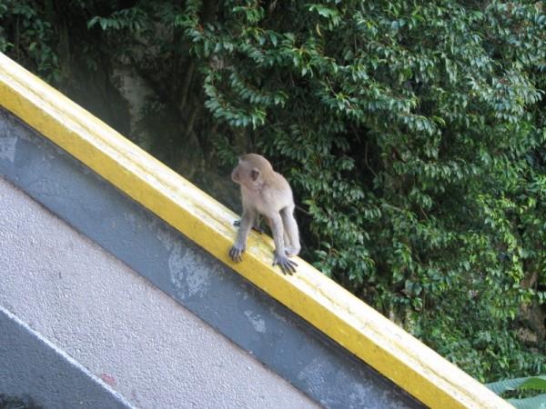 Little Ape