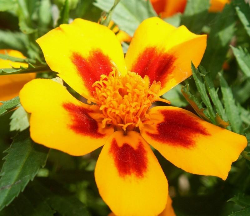 Blume 4