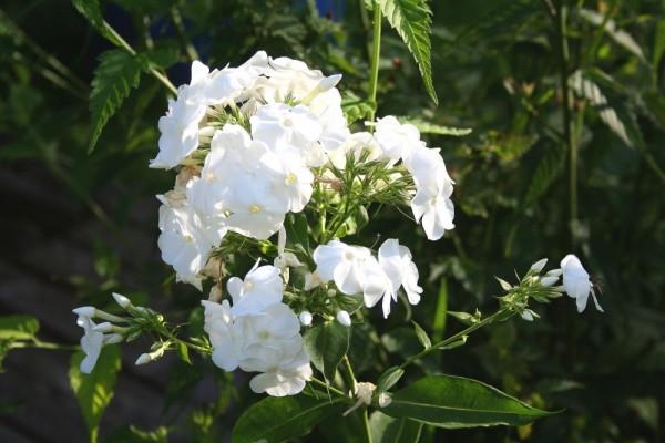 Blumen..01