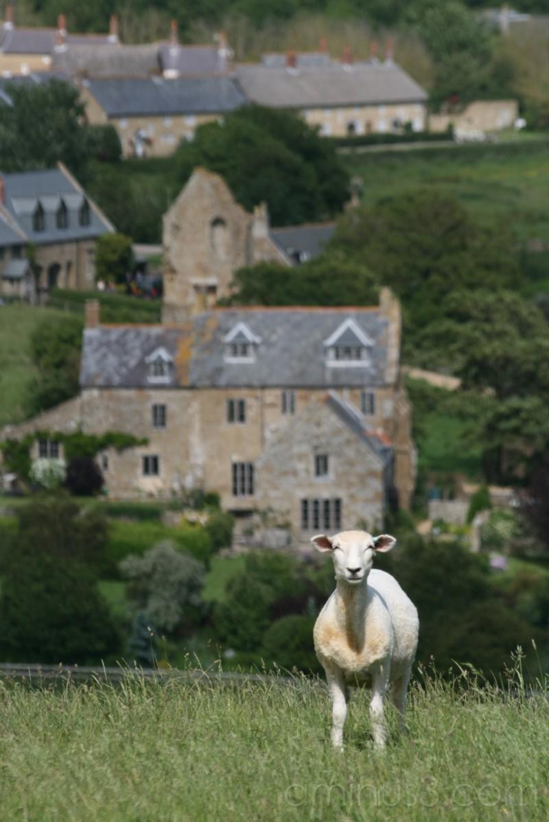 church and lamb