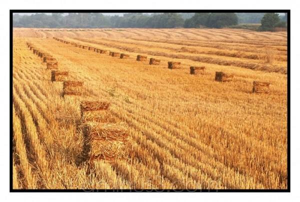 feil of hay