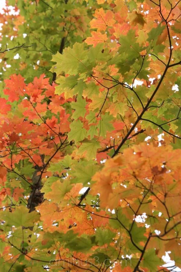fall branche