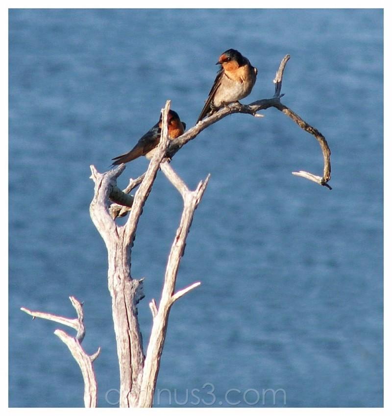 birds on a limb