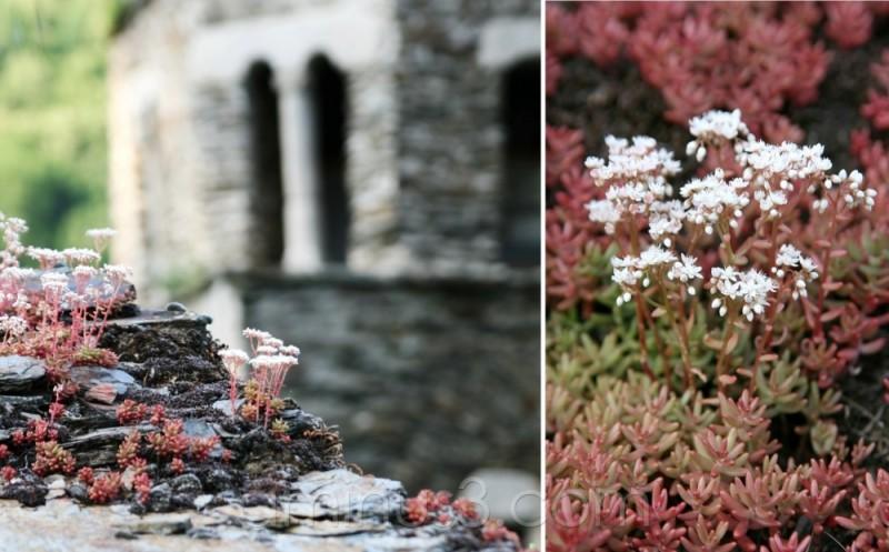 flower habitat