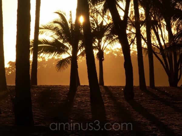 palms sunrise