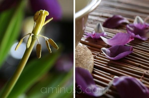petals & collage