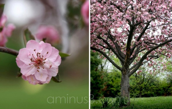 tree & blossom