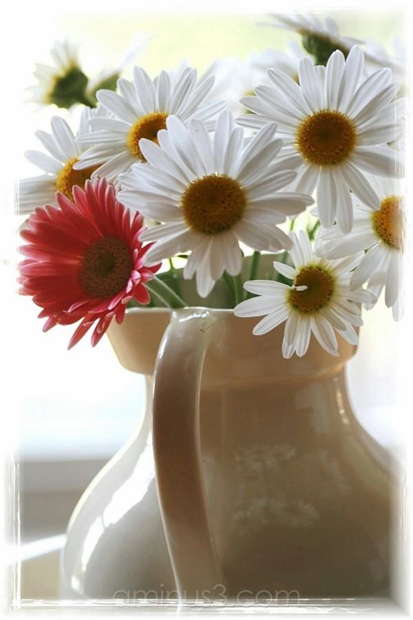 bouquet de margerite...