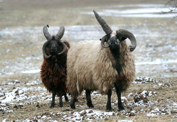 3 horns