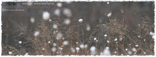 **winter wonderland**