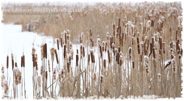 ~ winter wonderland ~