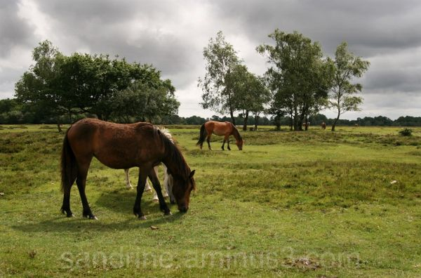 The new forest 3