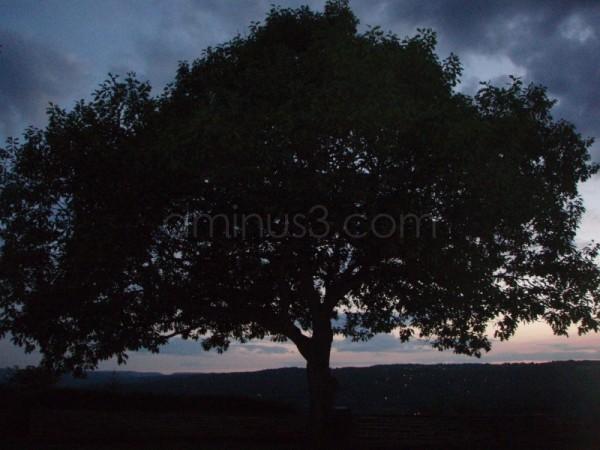 Tre i solnedgang