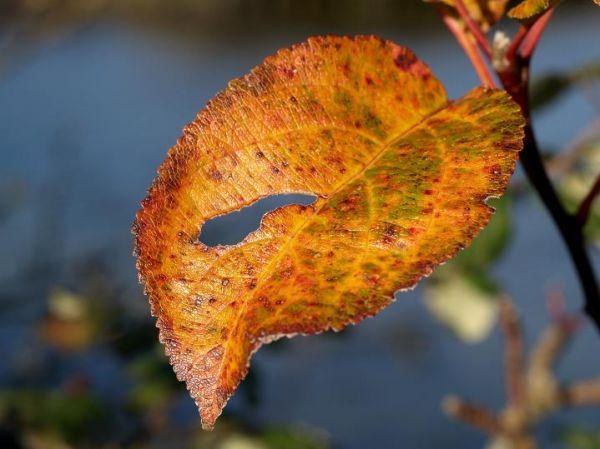 leaf, autumn, fall