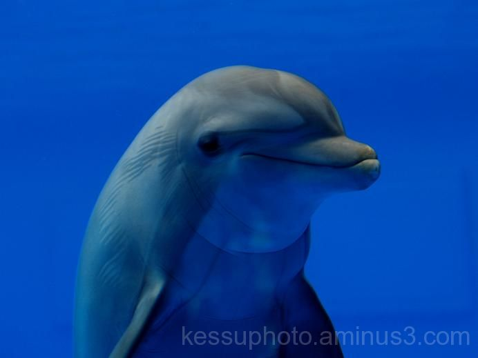 blue, dolphin, smile