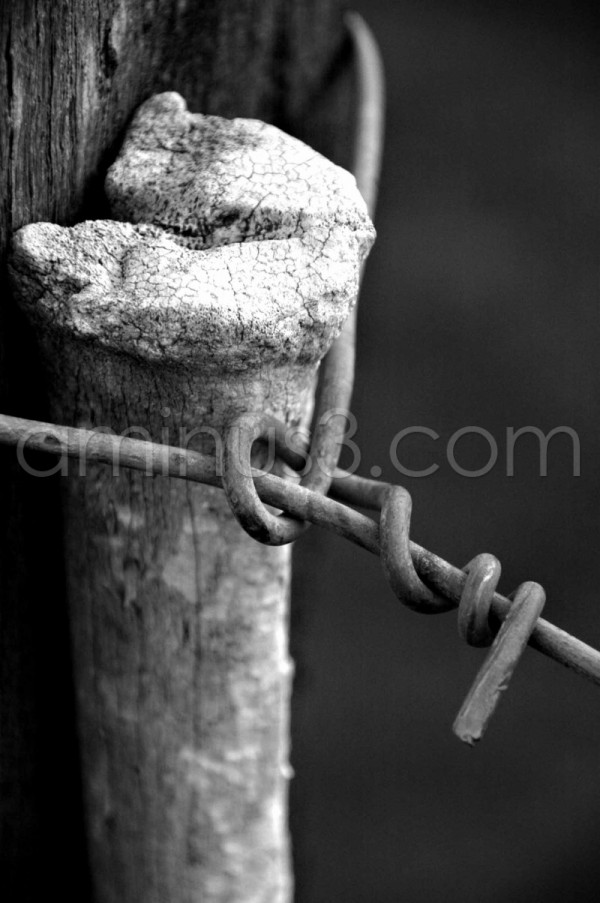 number eight wire fence