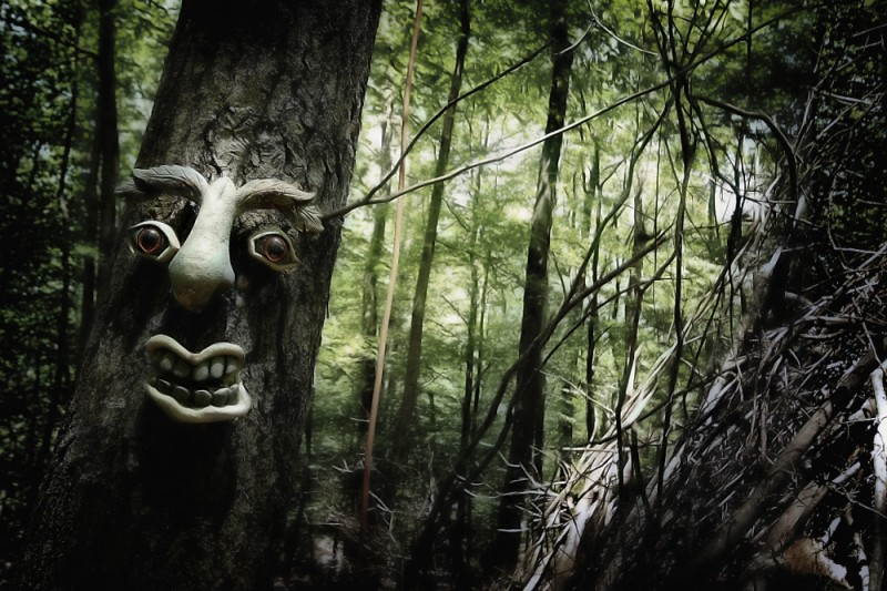 Tree, Wood, Face, Creepy