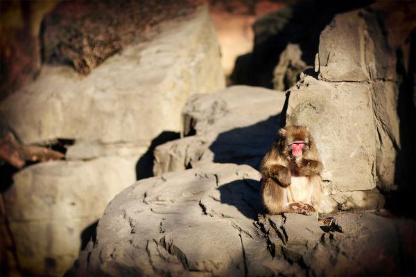 Monkey-2