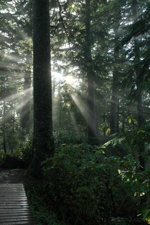 sunlight beams through trees
