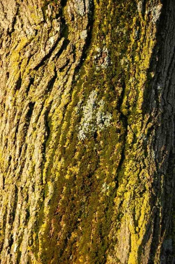 Tree bark moss lichen texture