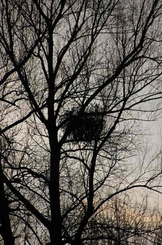 Silhouette Nest Belgium