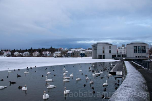 Ráðhús Reykjavíkur and Tjörnin, Reykjavik, Iceland