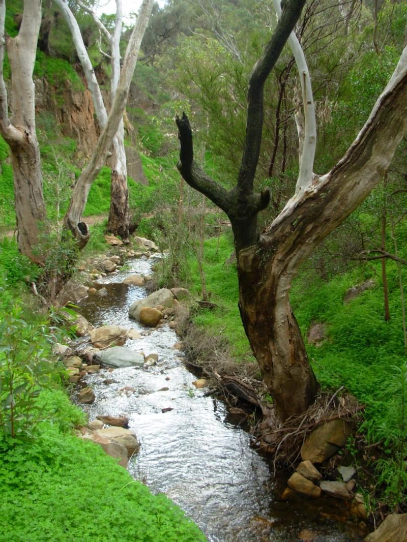 the stream on mt. lofty