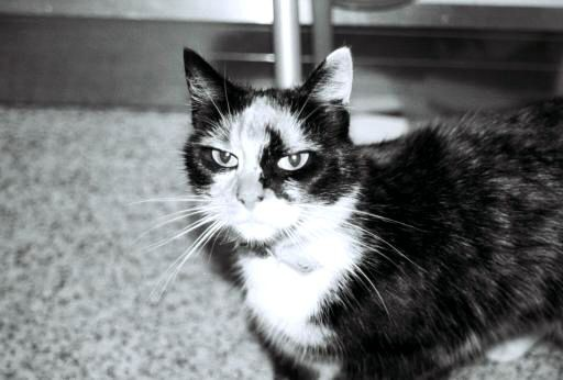 tuppence the evil cat