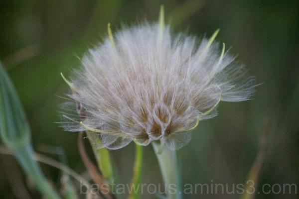 Grass Seeds, Bend OR