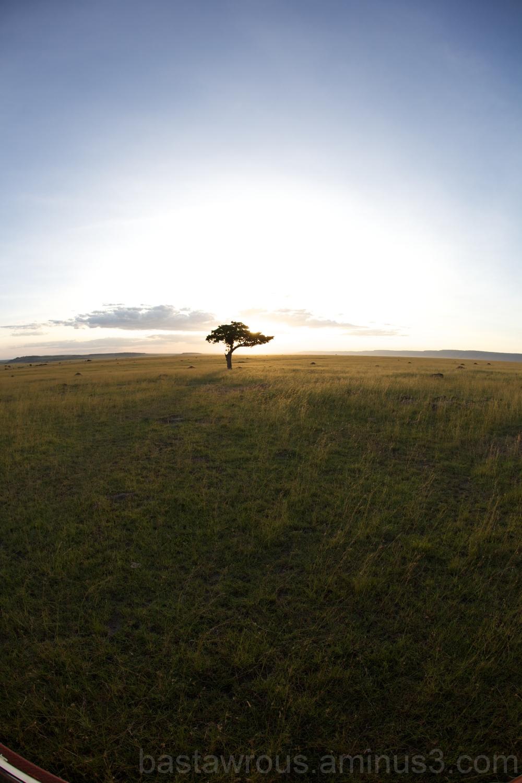 Masi Mara