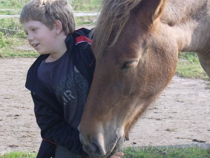 I love horsez