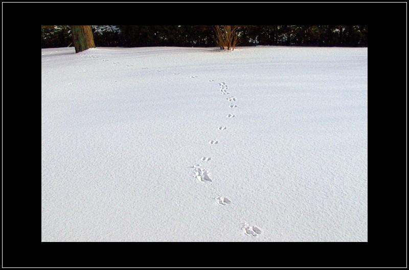 un écureuil ? - a squirrel?