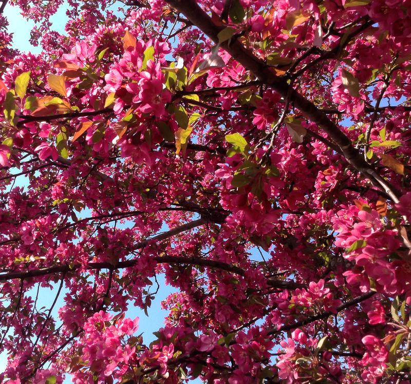 les pastels du printemps - pastels of spring