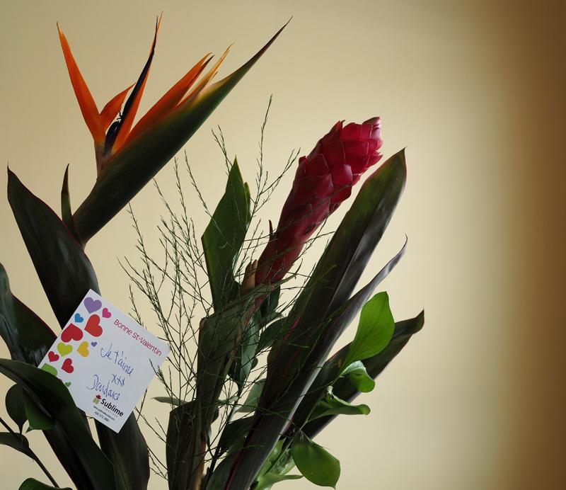 Elle m 39 offre des fleurs she gives me flowers for Offre des fleurs