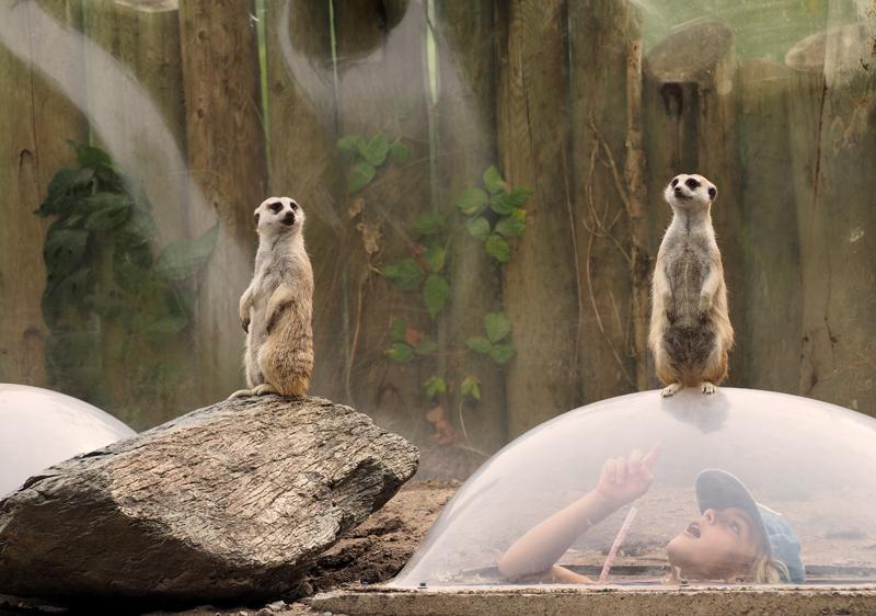 « on nous surveille là ? » - « ça l'air que non… »