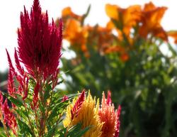 la Vie en couleurs - Life in colours