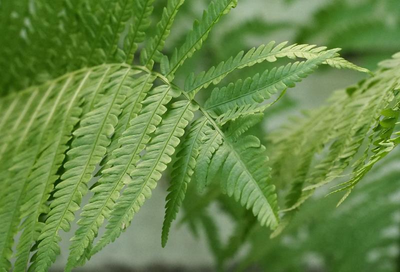 vert - green